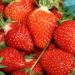 Smoothie   Joy Bauers 5 Calorie   Purity Natural